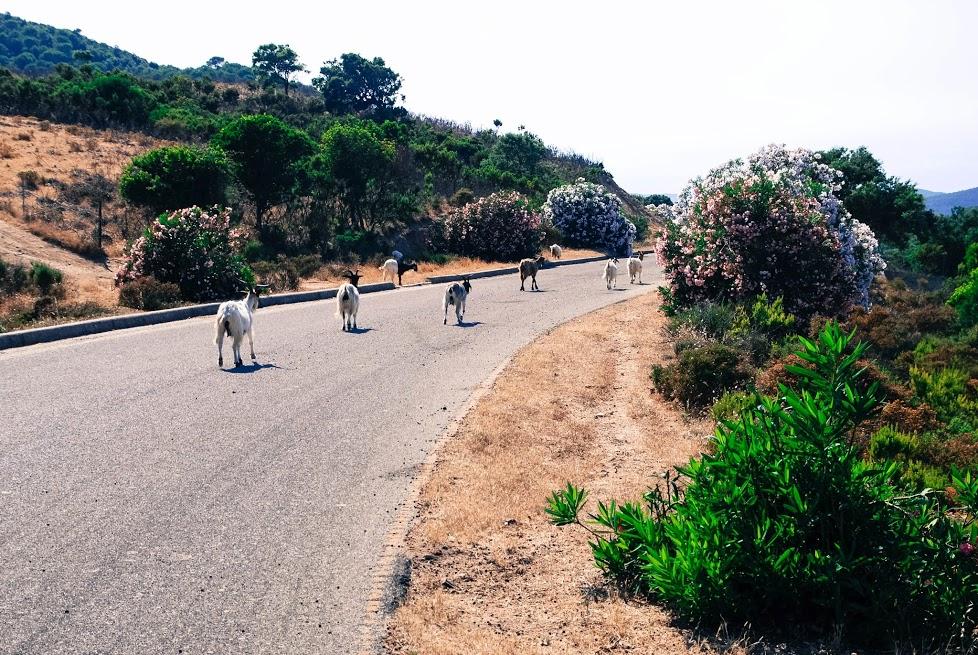 Cesta na Costa Verde, ještě že tady jsou ty kozy, jinak by Šošánna nikam nešla.